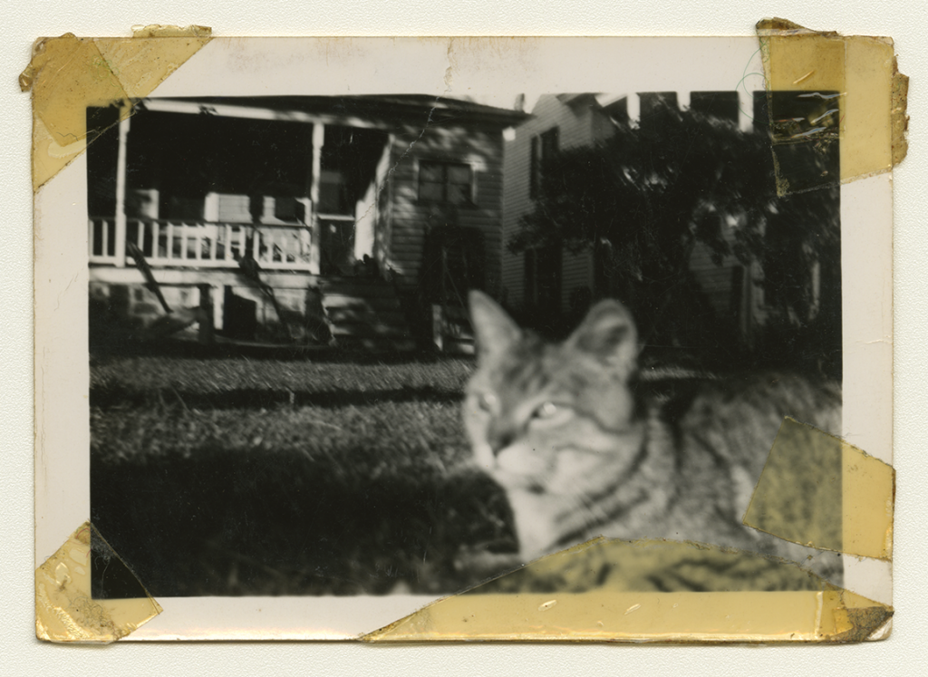 A black and white photo of Anne Wilson's family cat in their grass.