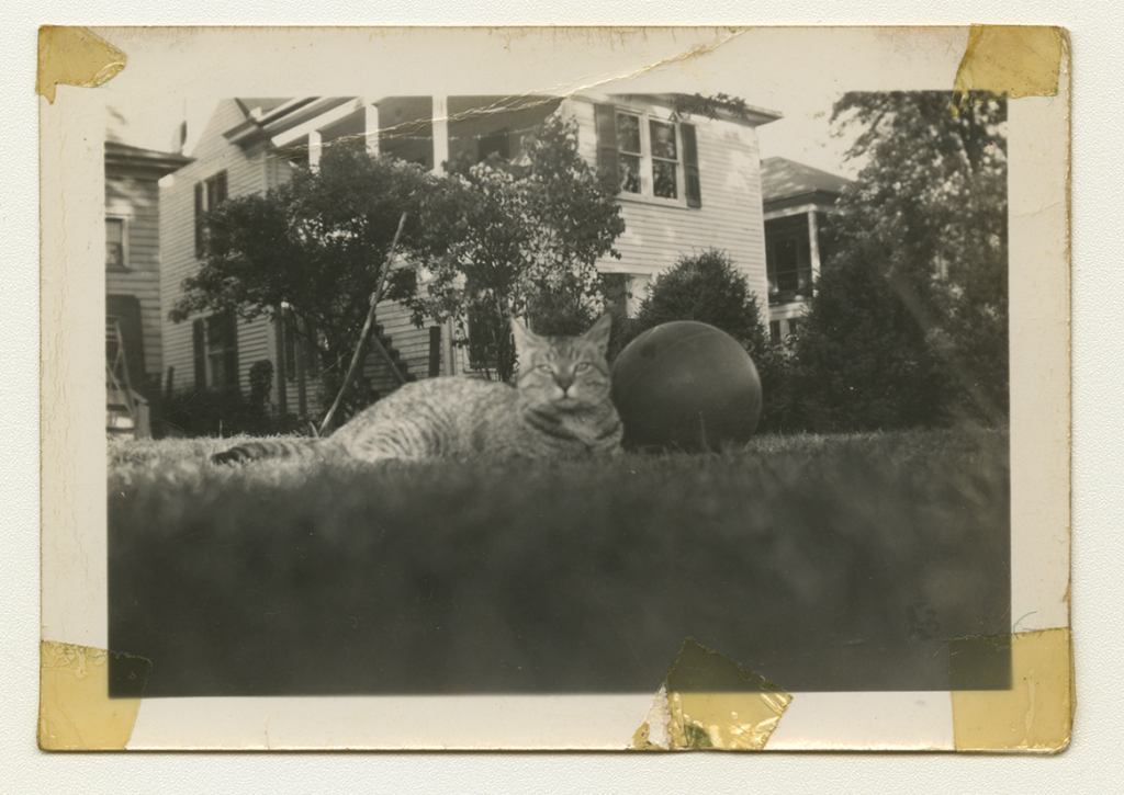 A black and white photo of Anne Wilson's family cat in their grass next to a ball.